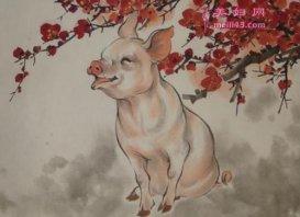 属猪的和什么属相相冲?
