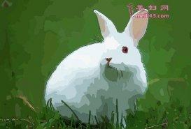 属兔的人2020年犯太岁吗,今年运势刑太岁如何化解
