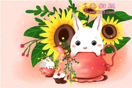 小白兔来采野菊花故事